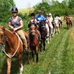 cheval_chemin